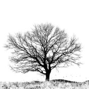 efd382805699839ab10987df23c32e74--black-and-white-tree-white-trees